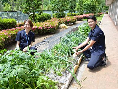 グリーンビレッジ安行の施設庭園の畑