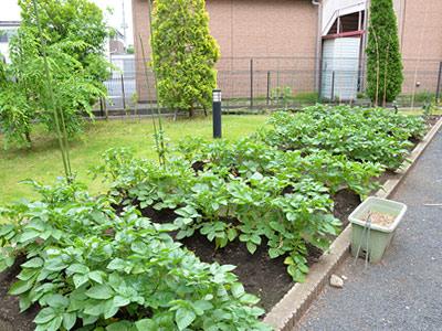 広い敷地内には、レクリエーションの一環としても使用している家庭菜園もあります。